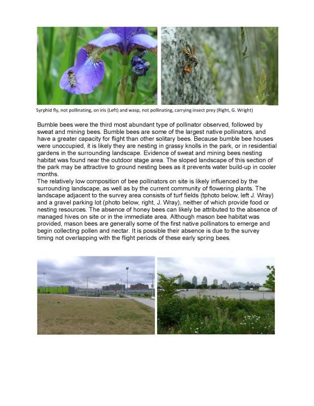 Trillium Park bee survey 16-page-003