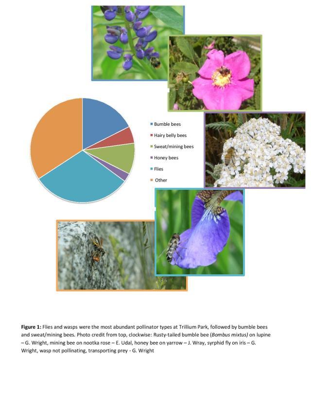 Trillium Park bee survey 16-page-005